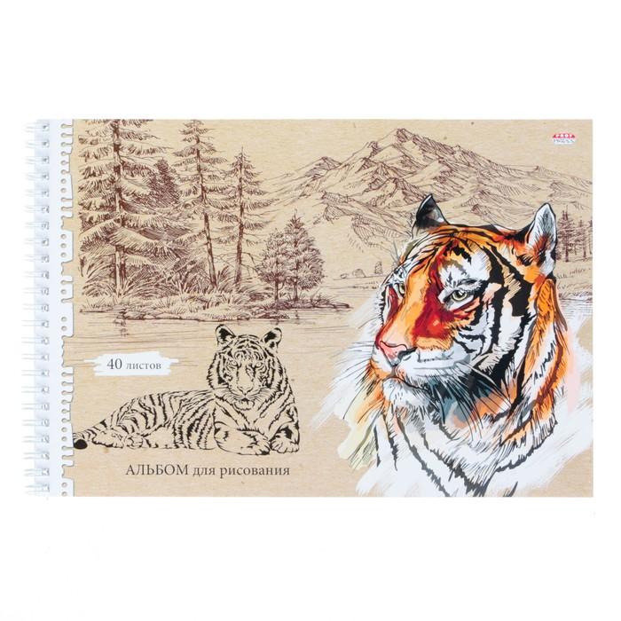 Альбом для рисования А4, 40 листов на гребне «Амурский тигр», бумажная обложка - фото 373638995