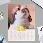 "Calendar sheet A4 ""symbol of the year - 2020 - 1"""