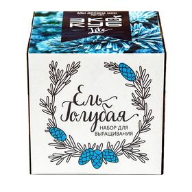 """Экокуб LITE набор для выращивания """"Ель Голубая"""""""