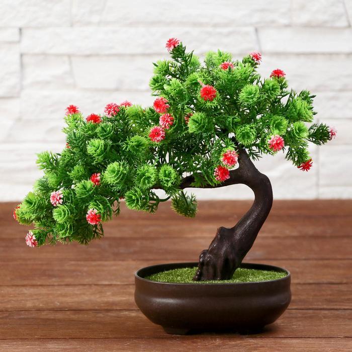 фара цветок бонсай фото именно тот фасон