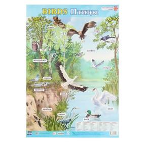"""Плакат """"Английский язык. Птицы"""" А2"""