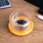 """The set of """"Young naturalist"""": magnifier 2 angle, a 2x magnification, the folding glass, spider"""