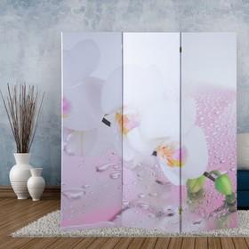 """Ширма """"Орхидея и капли воды"""", 160 × 150 см"""