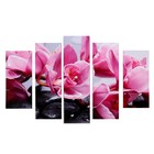 """Модульная картина """"Розовые орхидеи"""" (2-23х52; 2-24х70; 1-24х80) 120х80см"""