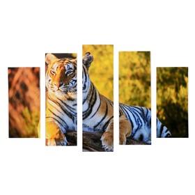 """Модульная картина """"Тигр"""" (2-23х52; 2-24х70; 1-24х80) 120х80см"""