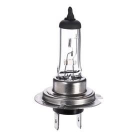 Halogen lamp Cartage H7, 55 W, 12 V