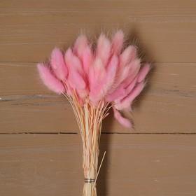 Сухие цветы лагуруса, набор: max 60 шт., цвет розовый