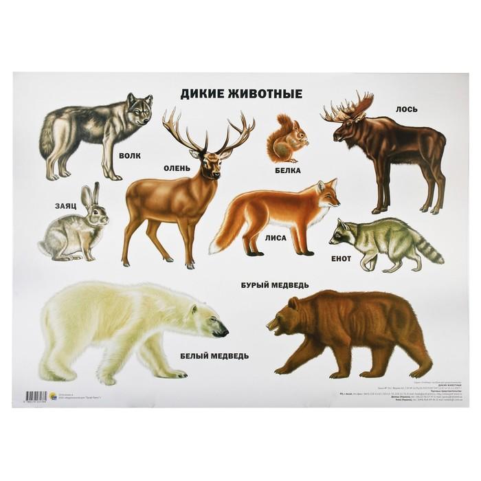 Картинки дикие животные для детей, для оли мерцающие