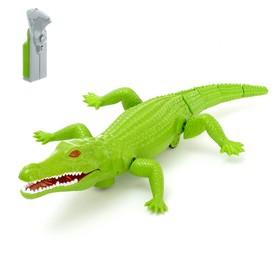 Крокодил радиоуправляемый «Аллигатор «, работает от батареек