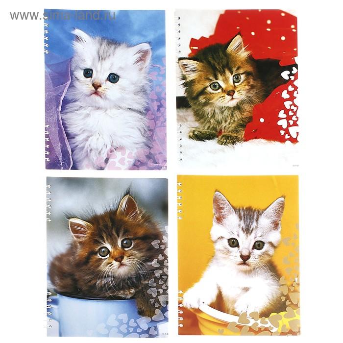 """Тетрадь 80 листов клетка на гребне """"Кошки"""", картонная обложка, 4 вида МИКС"""