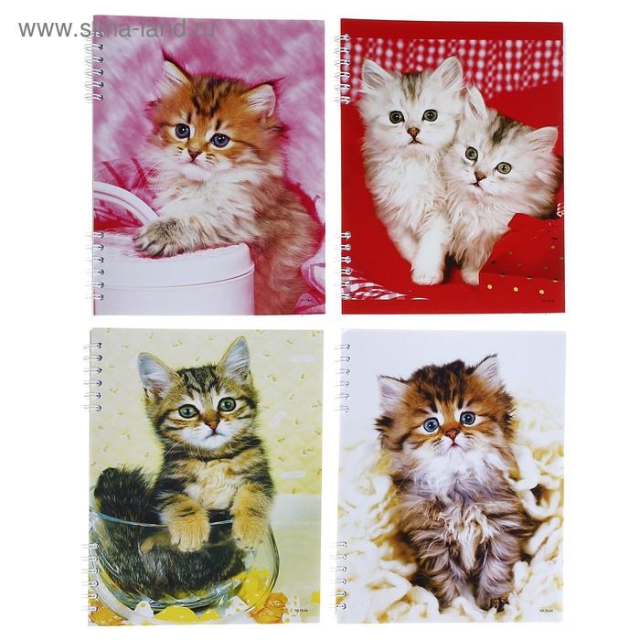 """Тетрадь 96 листов клетка на гребне """"Кошки"""", картонная обложка, 4 вида МИКС"""