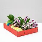 Ящик-коробка «Макарунас», красный, 25,5 х 20 х 4,5 см - фото 701561
