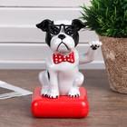 """Pendulum plastic solar cells """"Bulldog in sunglasses"""" 10х6х7 cm"""