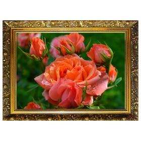 Алмазная мозаика «Королева сада» 29,5×20,5 см, 25 цветов