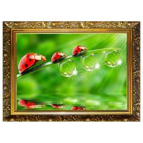 Алмазная мозаика «Капельки росы» 29,5×20,5 см, 25 цветов