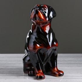 """Копилка """"Собака Ротвейлер"""", глянец, чёрный цвет, 35 см"""
