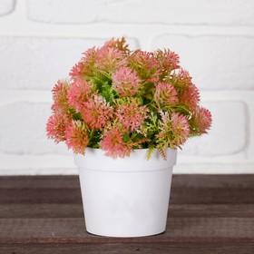 """Bonsai pot """"Pushy dill fern"""" 8*18 cm, mix"""