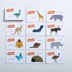 Игра-викторина «Животные» 5+, 50 карточек - фото 105602181