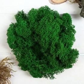 """Мох стабилизированный """"Зелёный"""" 50 гр."""