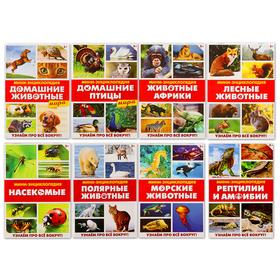 Мини-энциклопедии «Мир животных», 8 шт. по 20 стр.