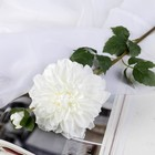 """Цветы искусственные """"Георгин Эвелин"""" 14*68 см, белый - фото 4455742"""