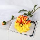 """Цветы искусственные """"Георгин Эвелин"""" 14*68 см, оранжевый - фото 4455748"""