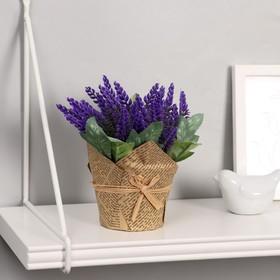 """Bonsai pot """"gentle Lavender"""" 10*15 cm, mix"""