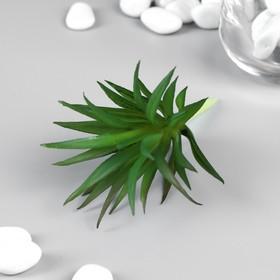 "Artificial succulent for creating Floriana ""of Gasteria triangular"" 7 cm"