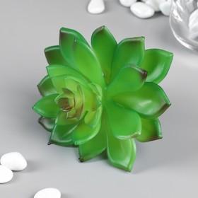 Artificial succulent for creating Floriana