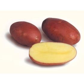Семенной картофель 'Розара', 1 кг +/- 10%, Элита Ош