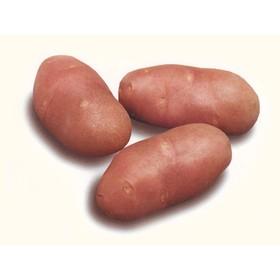 Семенной картофель 'Ред Скарлетт', 1 кг +/- 10%, Элита Ош