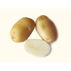 Семенной картофель 'Удача', 1 кг +/- 10%, Элита Ош