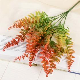 "Bouquet ""fern Didibahini"" 24 cm, mix"