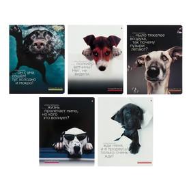Тетрадь 48 листов в клетку «Прикольные собаки», обложка мелованный картон, УФ-лак, МИКС