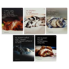 Тетрадь 48 листов в клетку «Приколы. Кошачьи мечты», обложка мелованный картон, гибридный лак, МИКС