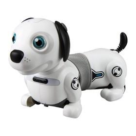Собака робот «Дэкел Джуниор»