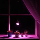 Светильник для растений 15 Вт, 12 мкмоль/с, провод 1,7 метра с выключателем, липучка на окно