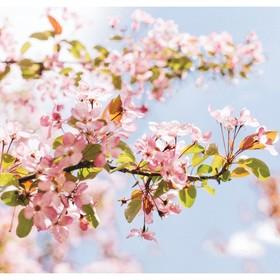 """Фотообои """"Цветение яблони"""", 210х200 см, 130 г/м"""