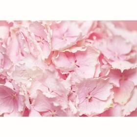 """Фотообои """"Цветы гортензии"""", 200х140 см, 130 г/м"""