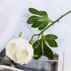 Цветок искусственный 'Пышный пион' 7х47 см белый Ош