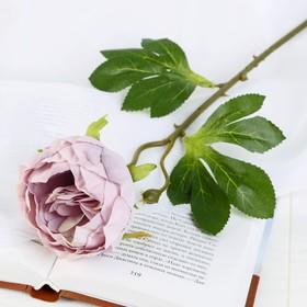Цветок искусственный 'Пышный пион' 7х47 см сиреневый Ош