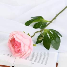 Цветок искусственный 'Пышный пион' 7х47 см розовый Ош