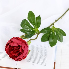 Цветок искусственный 'Пышный пион' 7х47 см бордовый Ош