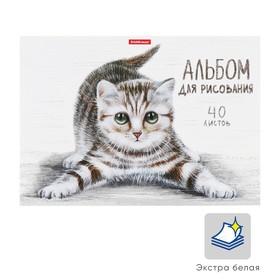 Альбом для рисования А4, 40 листов на клею Tabby, обложка мелованный картон 170 г/м2, жёсткая подложка, блок 120 г/м2