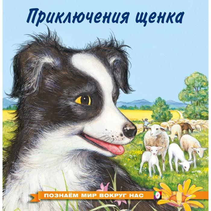 Познаём мир вокруг нас «Приключения щенка», 16 стр. - фото 982274