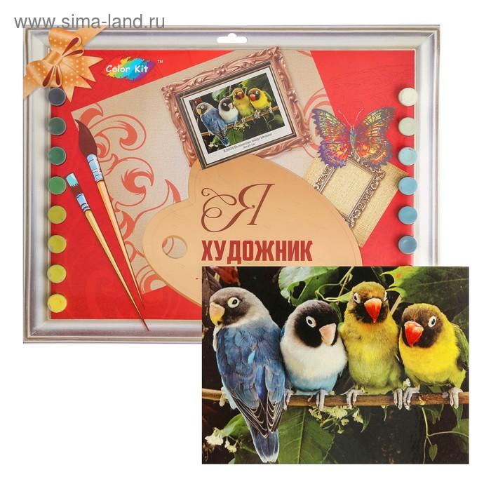 Раскраски по номерам на картоне «Волнистые попугайчики» 30 ...
