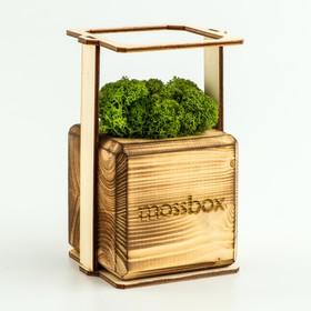 """ЭкоКуб  """"MossBox"""" Fire Green Cube мох стабилизированный"""
