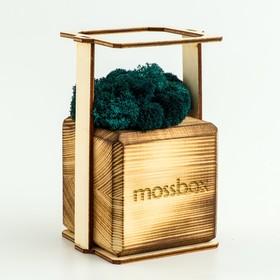 """ЭкоКуб  """"MossBox"""" Fire Moray Cube мох стабилизированный"""