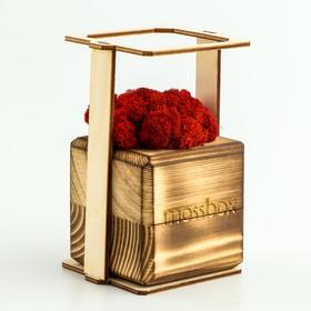 """ЭкоКуб  """"MossBox"""" Fire Red Cube мох стабилизированный"""