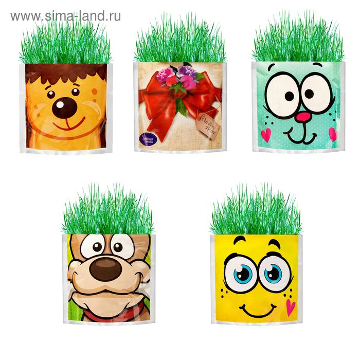 "Растущая трава ""Ежик"", трава"